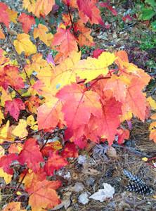 fall_leaves_sm