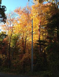 fall_trees2016_sm