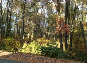 woods_2016_sm